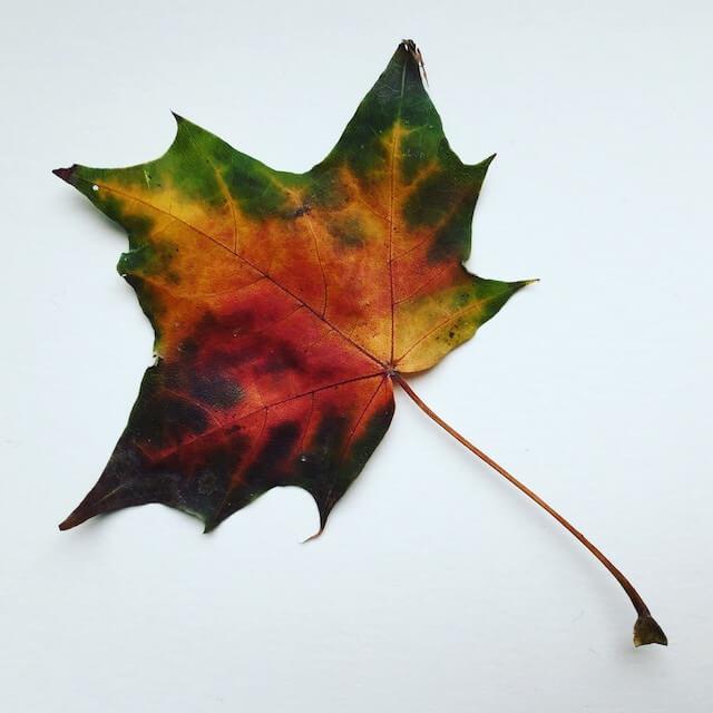 Herbstblatt, (c) hehocra