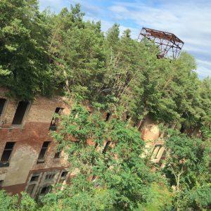 Bäume auf einer Ruine