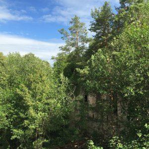 Bäume, Beelitz Heilstätten