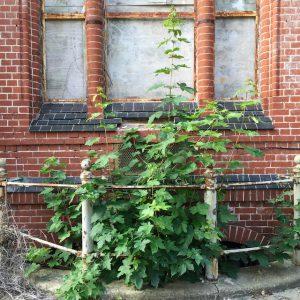 Pflanzen aus dem Keller