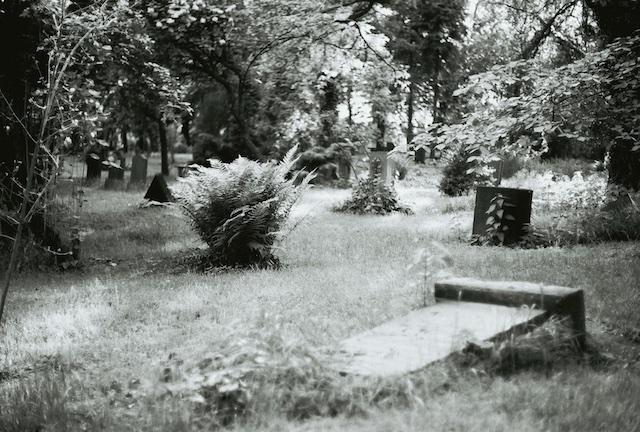 Friedhofsgarten, Fotografie, analog, (c) hehocra