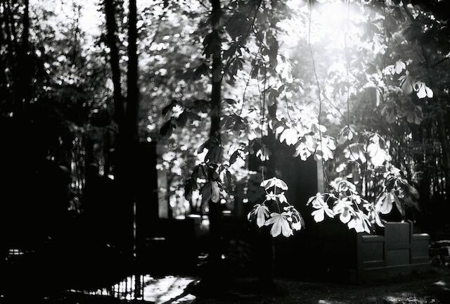Friedhofslicht, Fotografie, analog, (c) hehocra