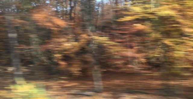 Wald 1/6, (c) hehocra