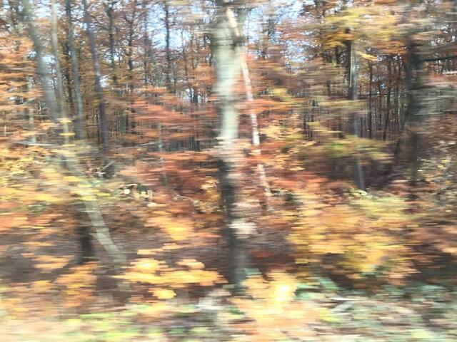 Wald 3/6, (c) hehocra