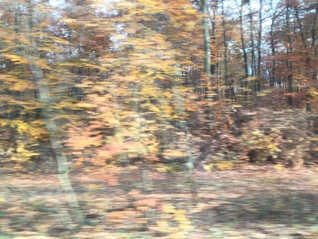 Wald 4/6, (c) hehocra
