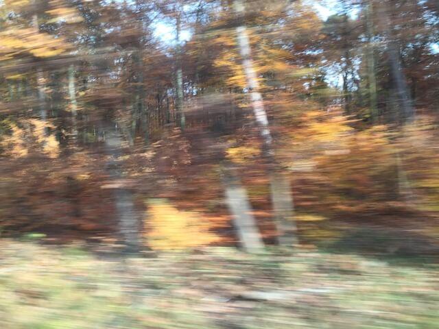 Wald 5/6, (c) hehocra