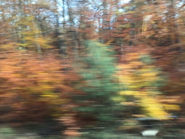 Wald 6/6, (c) hehocra