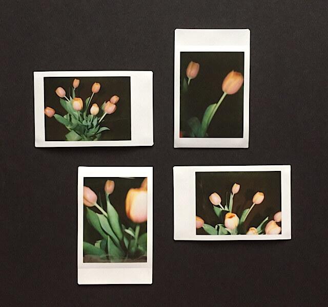 Tulpen II, Polaroids, (c) hehocra
