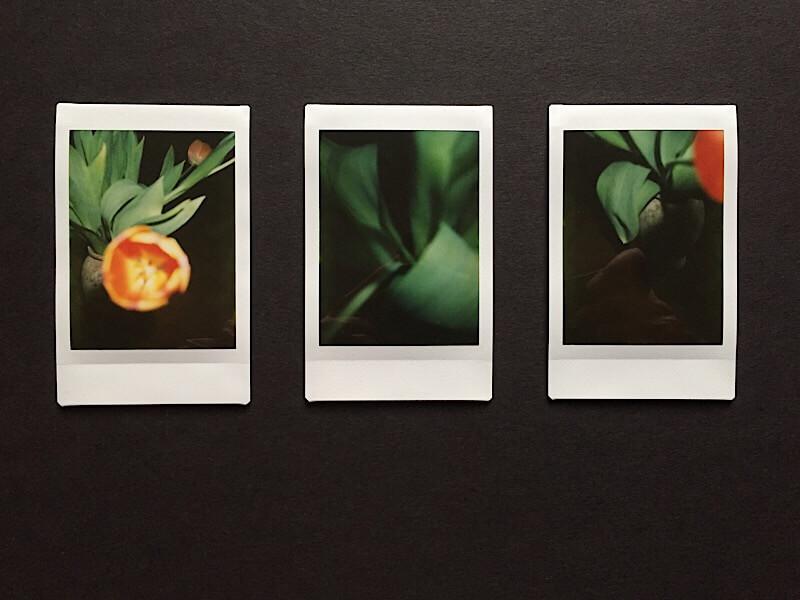 Tulpen III, Polaroids, (c) hehocra