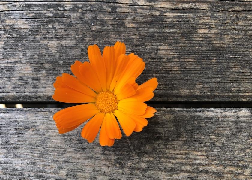 Orangenes zum Lesen – farbverrückte Buchempfehlungen