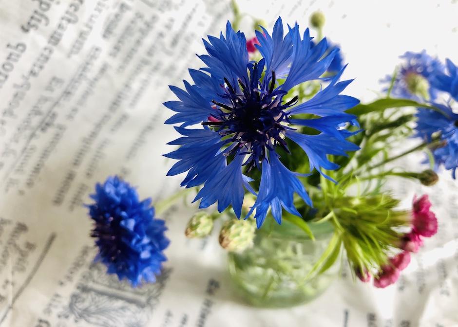 Blaues zum Lesen – farbverrückte Buchempfehlungen